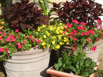 Grouping pots makes them easier to water and groom, and they give a better show.