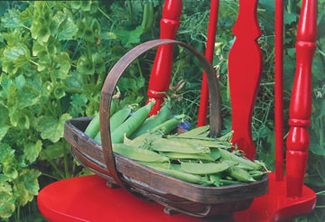 Harvest peas, green beans, and other vegetables routinely to encourage plants to keep producing.