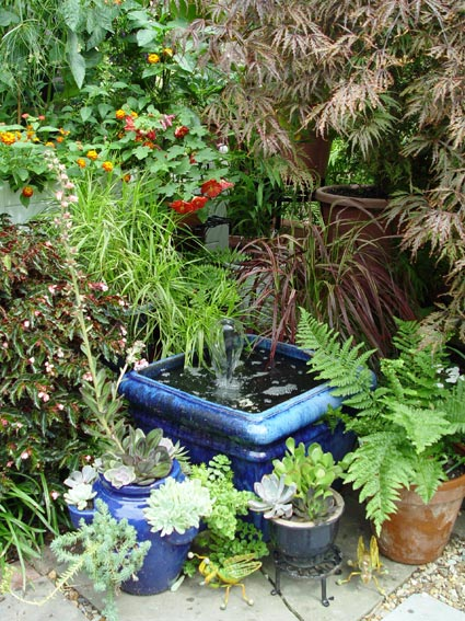 Patio Container Water Garden Images