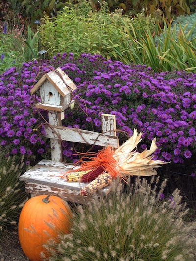Fall Blooming Perennials Add Color To The Autumn Scene Preen