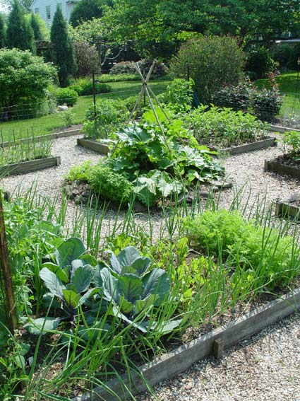 Recharge The Summer Vegetable Garden Preen