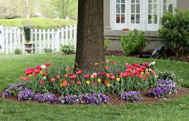 bulbs planted around a tree - Garden Ideas Under Trees
