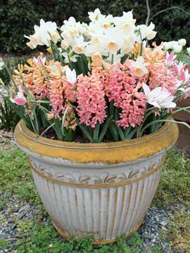 Bulbs in a pot.