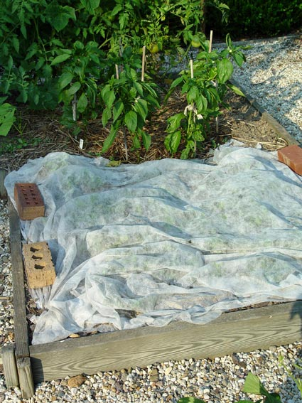 10 tips on growing your own vegetable garden preen for How to use preen in vegetable garden