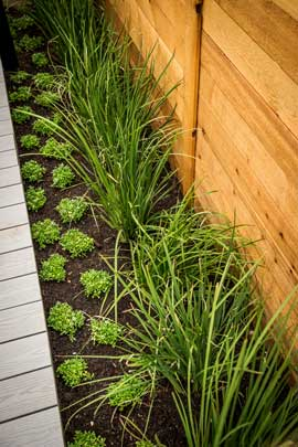 Smart Home deck privacy fence planting