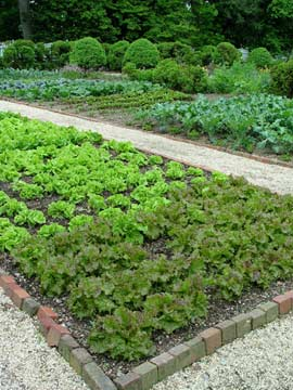 Blocks of greens