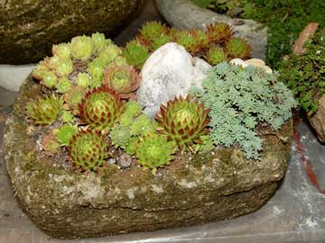 Hypertufa planter filled with succulents.