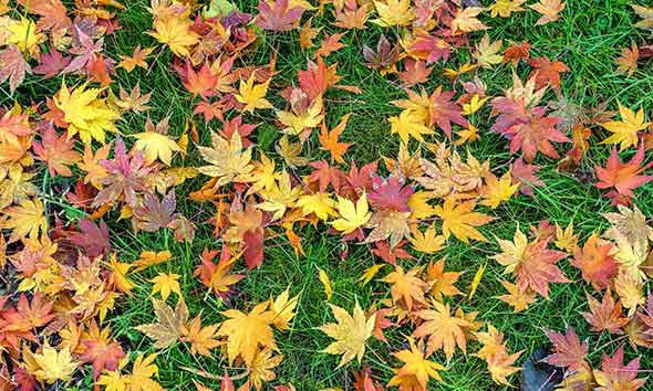 Colorful leaves on green grass