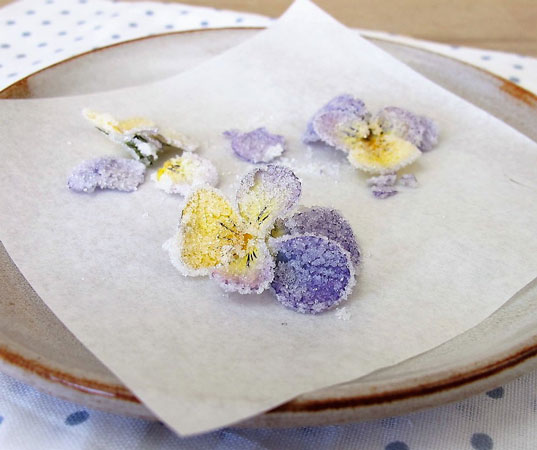 Candied viola flowers