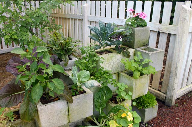 This edible garden is growing out of cinder blocks that have been cleverly stacked.