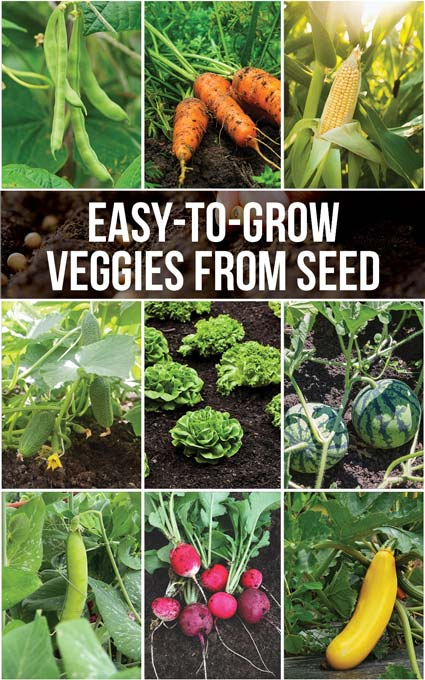 Easy-to grow veggie options