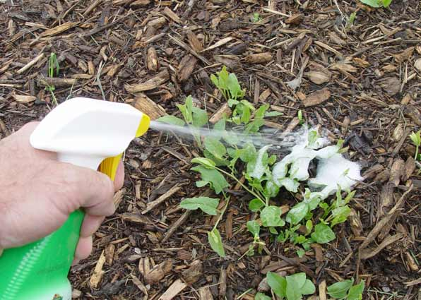 Spot weed control spray
