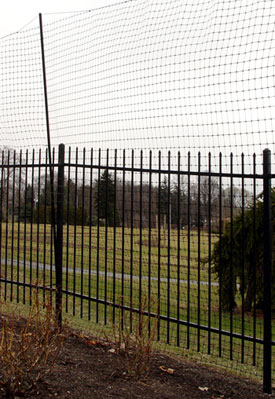 An 8-foot tall fence is one of the surest ways to deter deer from eating a landscape.