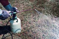 insect sprayer