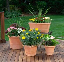 group container plants