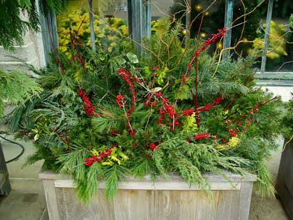 mixed evergreens container