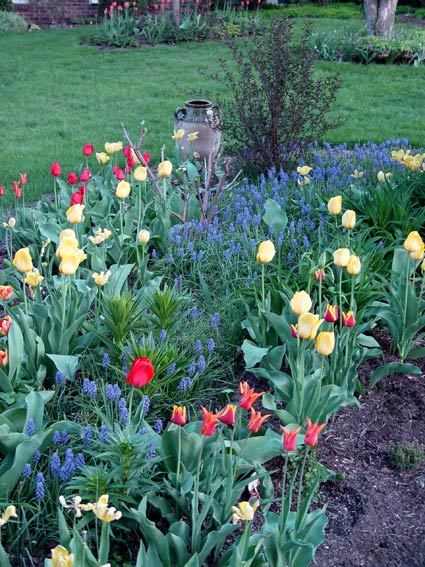 Bulbs And Perennials Interplanted