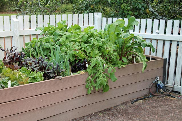 Elevated raised garden bed.