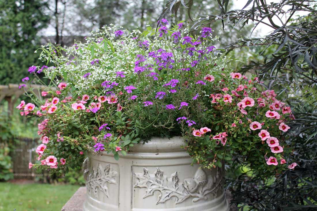 Pot with Euphorbia, Calibrachoa and Verbena