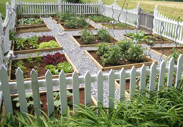 Raised garden bed surrounded by a picket fence.