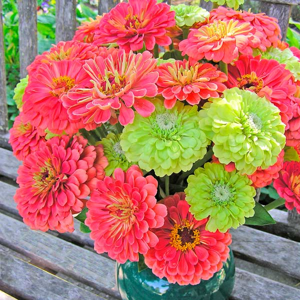 Perfect-for-cutting zinnias are easy to grow from seed in a sunny spot.