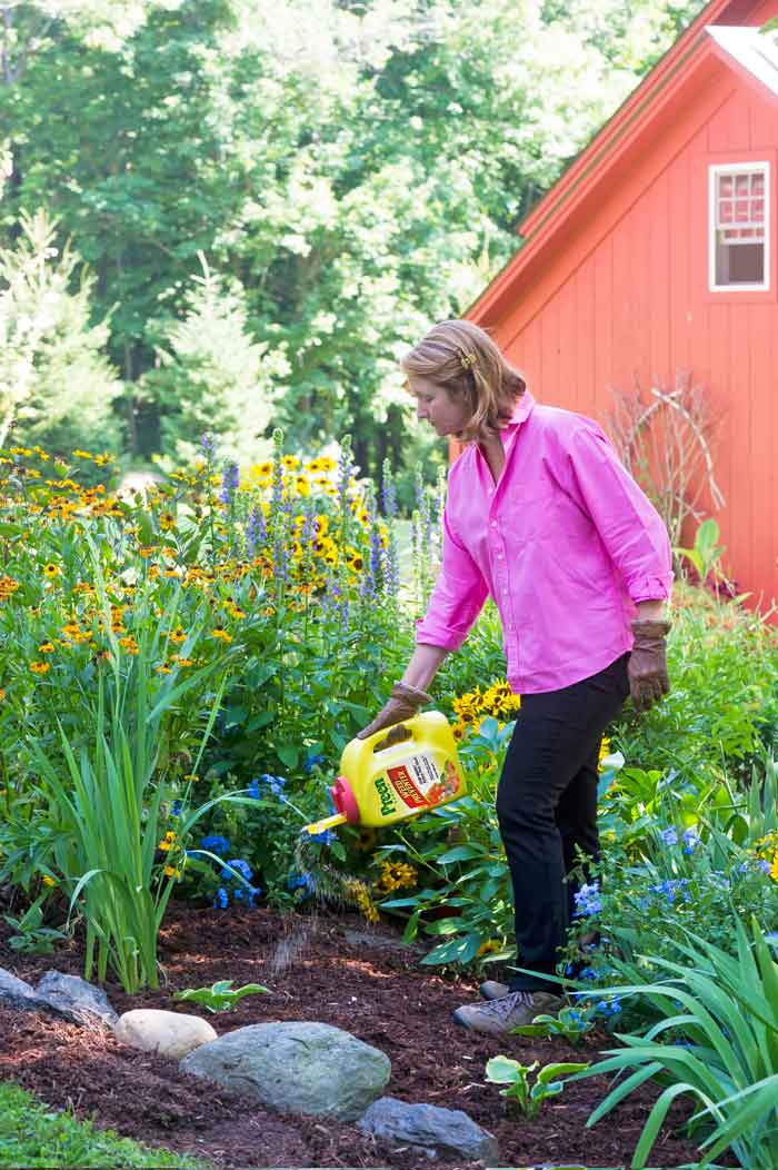 Applying Preen Garden Weed Preventer